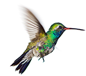 Google Humming Bird Update