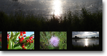 Foto Folder Web Site Design